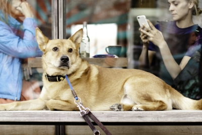 Pet Management & Tracking System Thumb